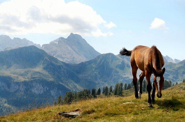 Planine, zelenilo, ilustracija: RGBStock