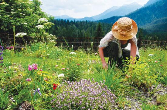 OVO VAS SIGURNO INTERESUJE: Kalendar branja lekovitog bilja