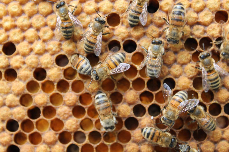 Uradite sve ovo na pčelinjaku i ne brinite