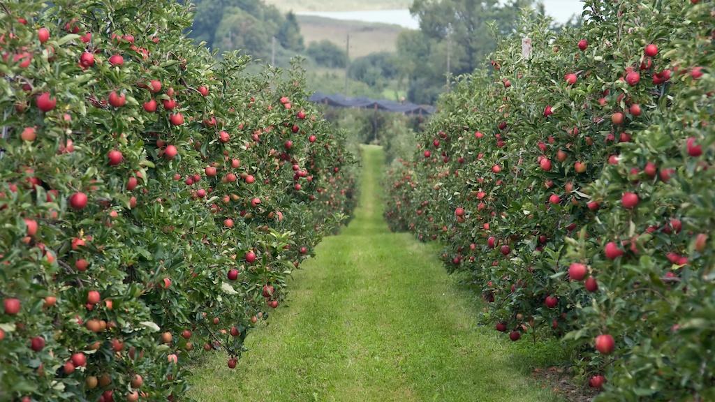 OBAVEŠTENJE: Danas će biti izvršeno prskanje voćnjaka na plantaži u Grezni