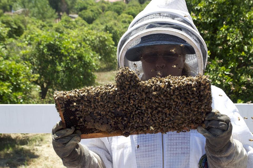 KNJAŽEVAC: Za pčelare knjaževačkog kraja 2 milona!